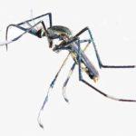 комары и вич