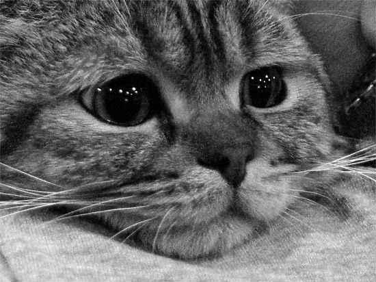 у кошек