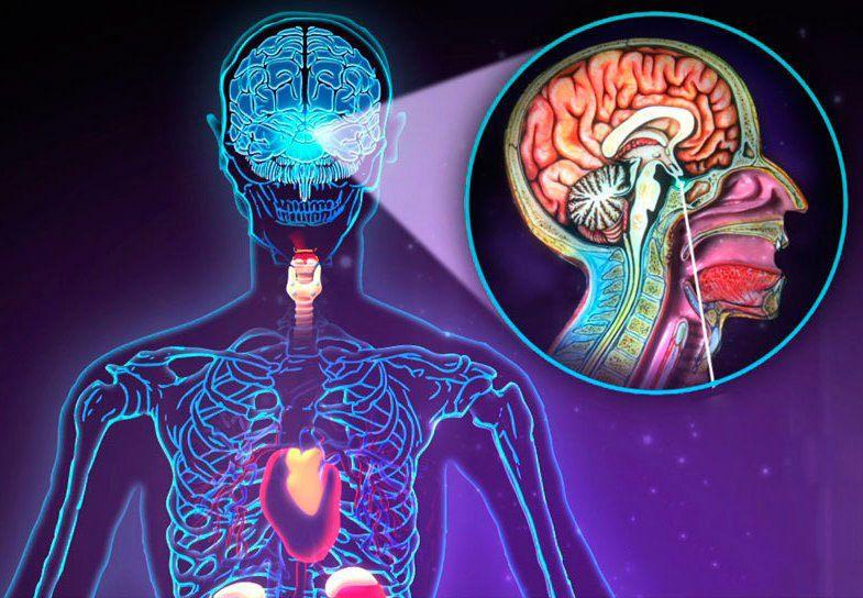заболевания эндокринной системы