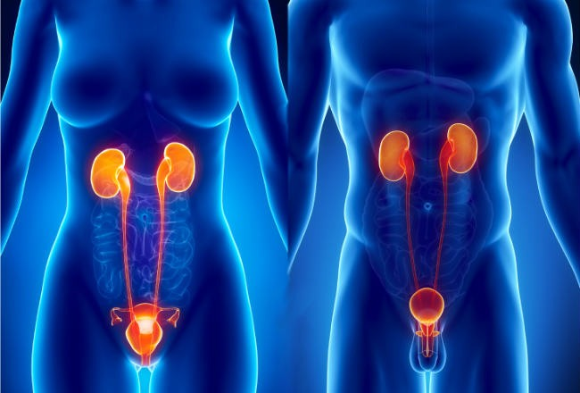 Заболевания репродуктивной системы